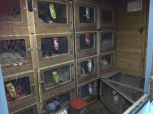 cosy shed full of hutches
