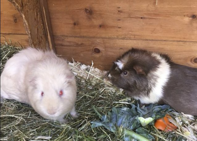 Archie and Ratatouille eating