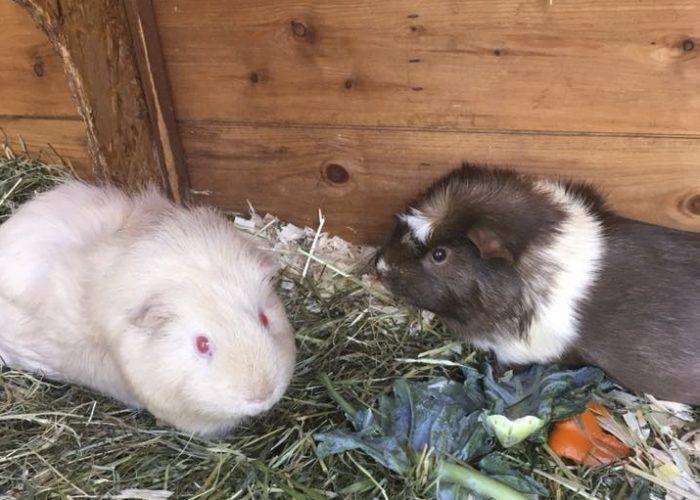 Archie and Ratatouille