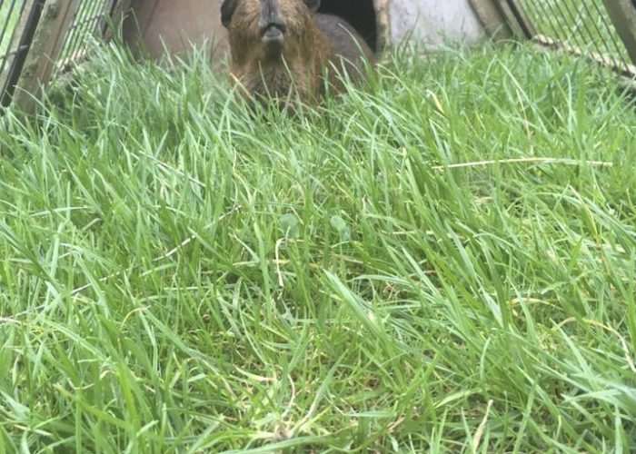 Fresh grass for Joey