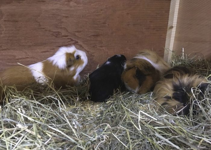 Nibbles, Ginger, Elmer and Wilma in their new hutch