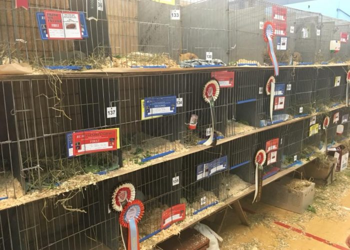 guinea pig pens at real london show 2018