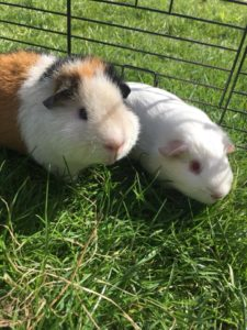 Snowbear and Max, Beautiful boars