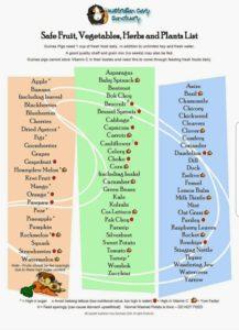 Cavy Feeding Chart